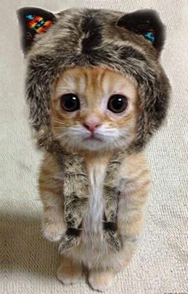 Ekspresi Kucing Lucu Saat Marah Bikin Ngakak Tapi Serem Nomer 25 Di