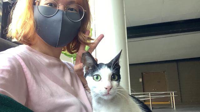 My Experience as a Volunteer BGC Cat Feeder