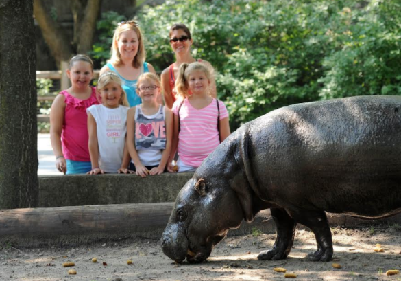 Family viewing hippo at Brookfield Zoo