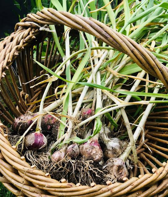 wet green garlic