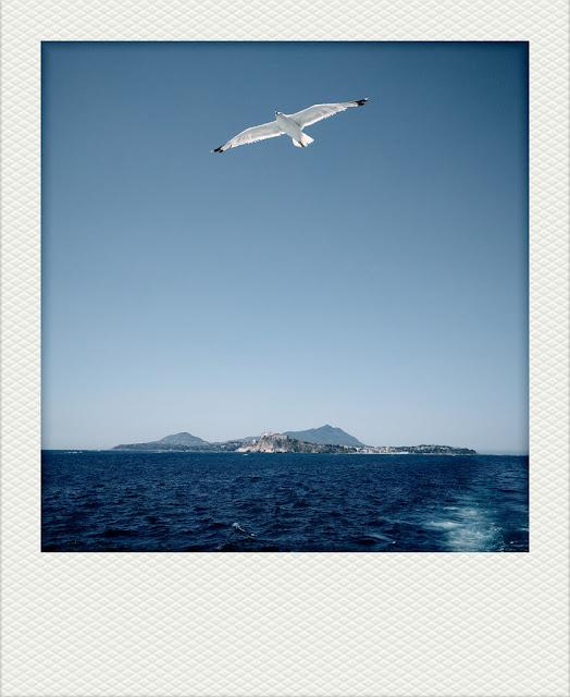 Panorama di Procida e Ischia con gabbiano in volo