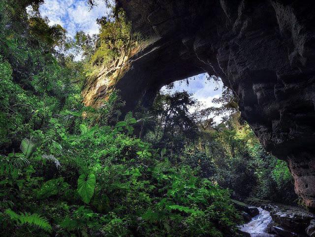 cueva de los guácharos cubierta de vegetación
