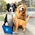 'Como Cães e Gatos 3' ganha sessão drive-in especial