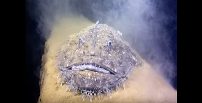 A closer look to the monster looking sea creature