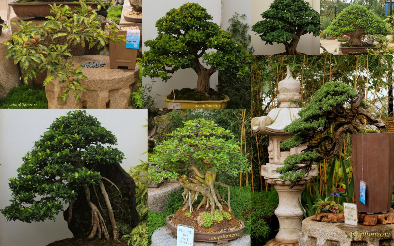 Andrea39s Plants Photos And Travels Bonsai At The Garden Show 2012