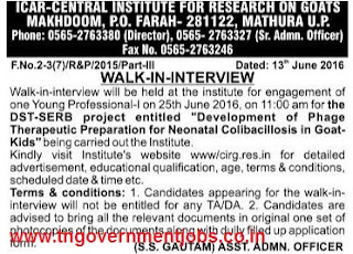 Walk in interview for Young Professional Post in ICAR CIRG