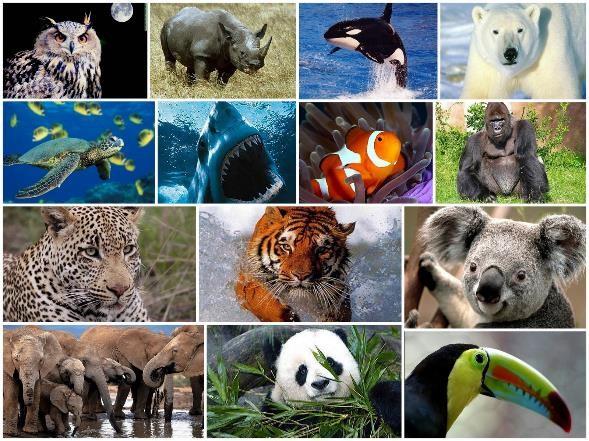 Animales en Peligro de Extinción en México: Causas, Consecuencias y Soluciones