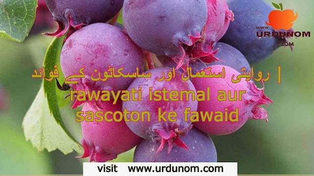 روایتی استعمال اور ساسکاٹون کے فوائد | rawayati istemal aur sascoton ke fawaid