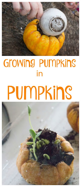 Growing Pumpkins in Pumpkins