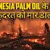 इंडोनशिया अपने Palm oil के लिए पूरी कुदरत की हत्या कर रहा है!