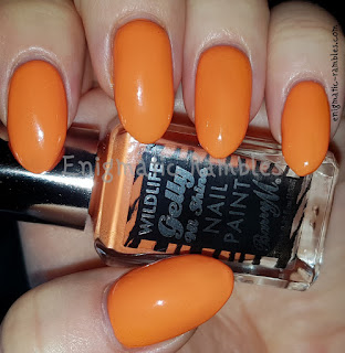 Barry-M-Desert-Orange-Wildlife