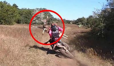 Tabrakan pengendara motor trail dan rusa