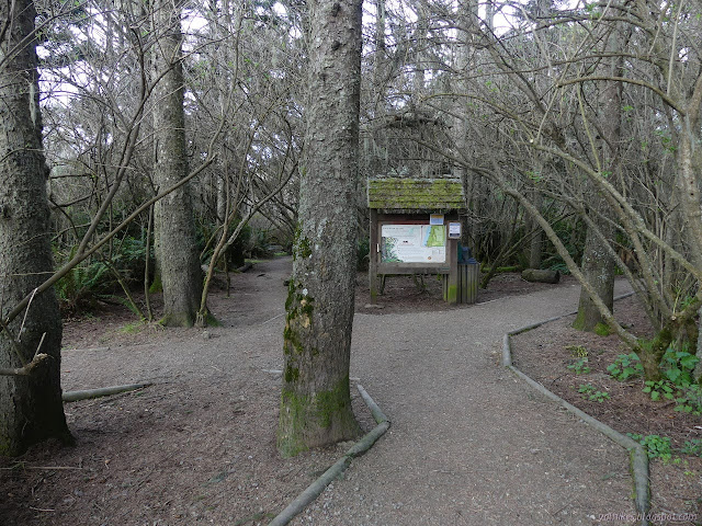 trails under the trees by the kiosk at Mad River Bluffs