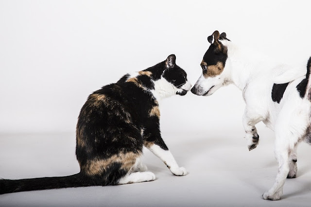 fight like cat and dog meaning