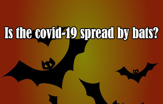 Is the covid-19 spread by bats?