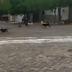 """Vídeo mostra homem soltando """"bomba"""" para assustar cachorros de rua, em Poço José de Moura - PB"""