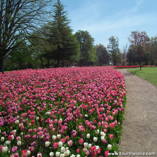 Tulips at the Chateau of Cheverny, Loir et Cher, France. Photo by Loire Valley Time Travel.