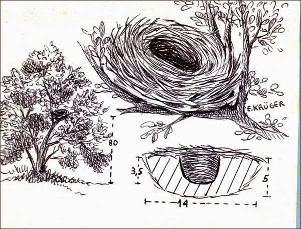 nidos de aves argentinas comesebos