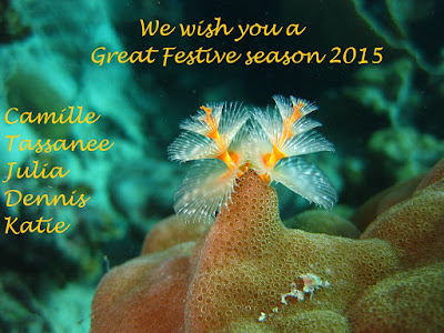 We wish you a great Festive Season