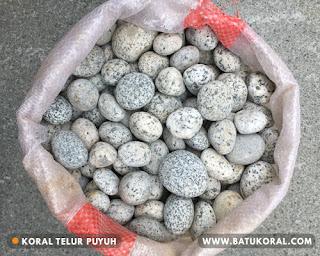 koral telur puyuh
