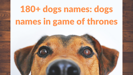 dogs names: 180+ dogs names in game of thrones,dogs,dogs names
