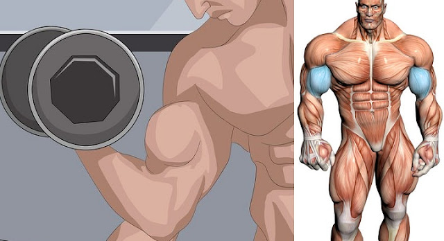 How to Increase Bicep Size and Build Big Biceps!