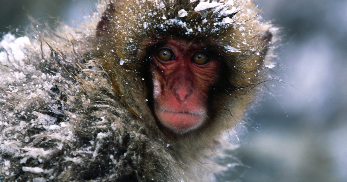 how do spider monkeys protect themselves from predators