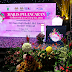 Royal Floria Putrajaya, biggest floral exhibition is coming to town!