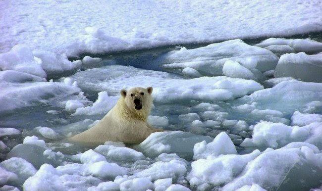 Science online: The negative effects of the global warming ...