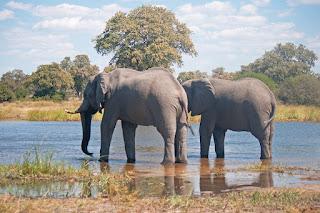 elephant death news,dainikjagron