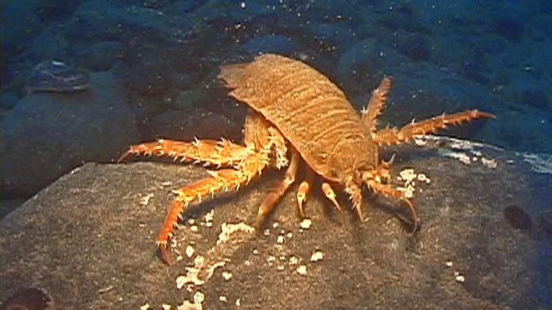 10 مخلوقات الأكثر إدهاشا في أعماق البحار.