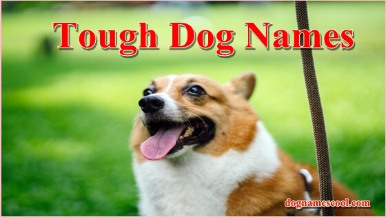 Tough Dog Names