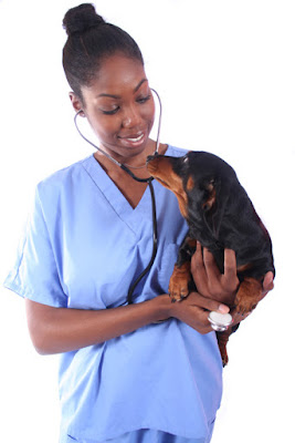 Use treats to help your dog and cat at the vet. Photo shows vet with dachshund