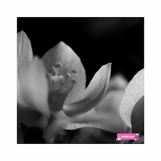 flowers by ewafebri