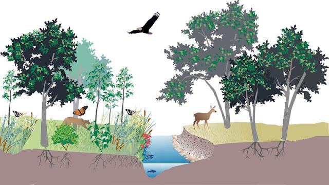 Pengertian Ekosistem dan Macam Macam yang ada pada Ekosistem