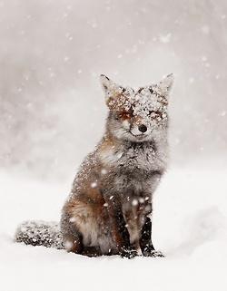 zimni krajina