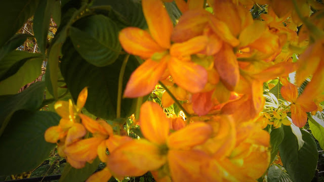 Beautiful Bright Tiny Yellow Flower | Photography | From'S Photography