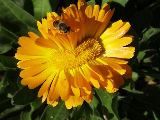 Organic Gardener Podcast- I Was Interviewed!