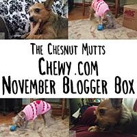 Chewy.com November Blogger Box