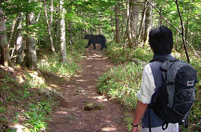 Leo núi gặp gấu rừng ở Nhật Bản - Trải nghiệm giật mình và sợ hãi.