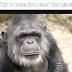 आखिर जानवर की उम्र क्यों कम होती है – Why Do Human Live Longer Than Animal