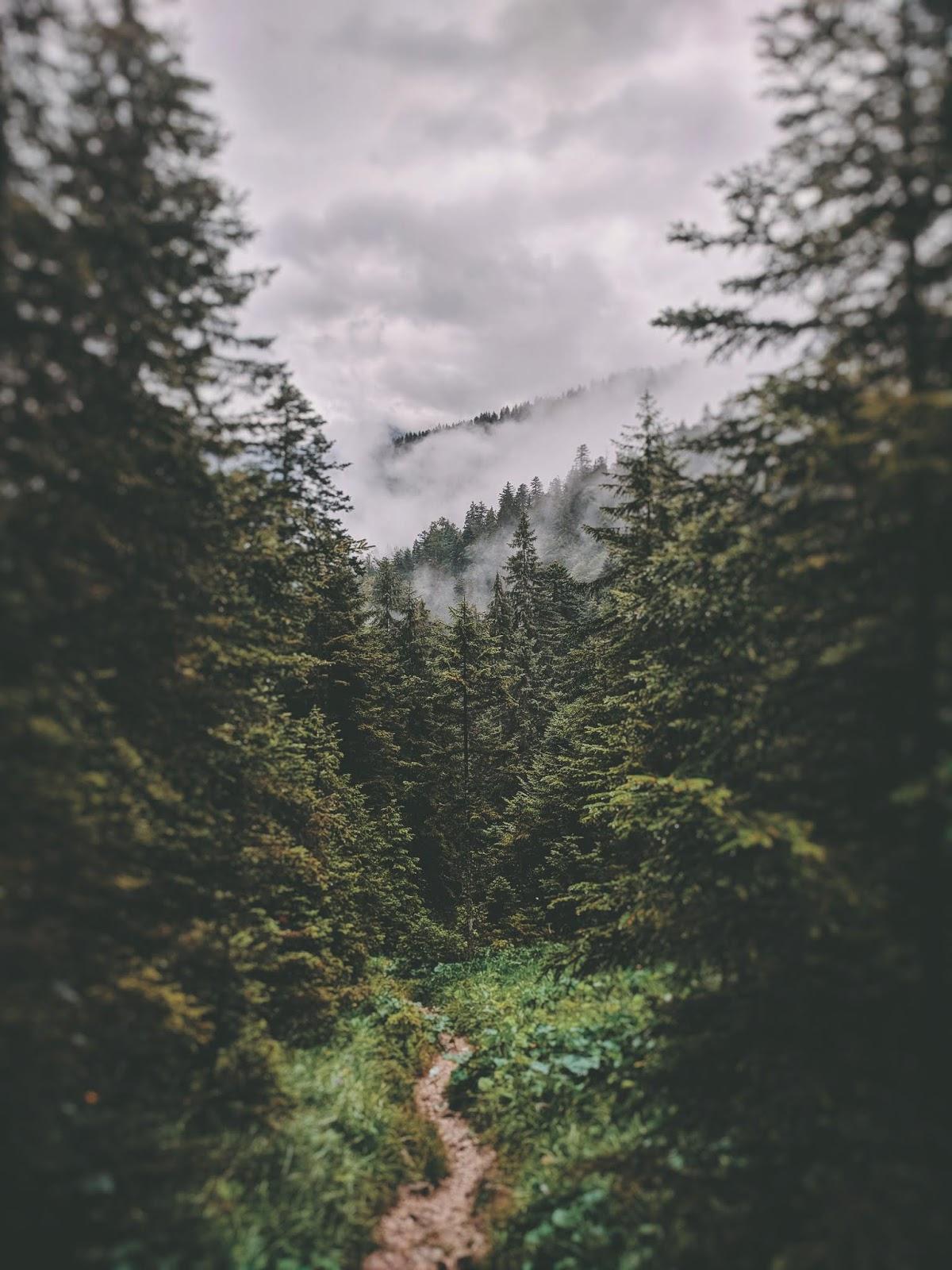 Das Internet des Waldes | Können Bäume miteinander kommunizieren?