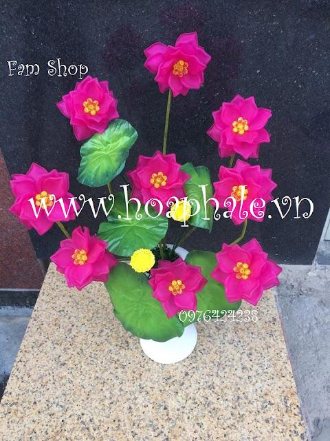 Hoa da pha le o Dong Nhan