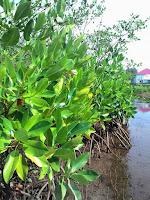Paket Ekowisata Di Kota Pariaman Sumatera Barat