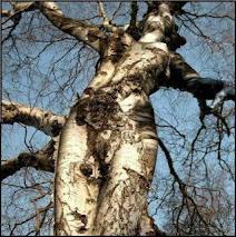 tree devas