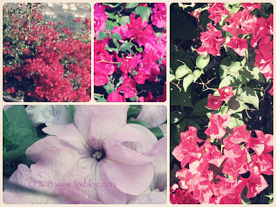 fall flower photo collage  www.3rsblog.com