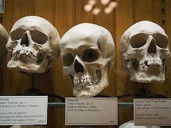 5 Museum Paling Aneh. Isinya Benda Aneh dan Menyeramkan