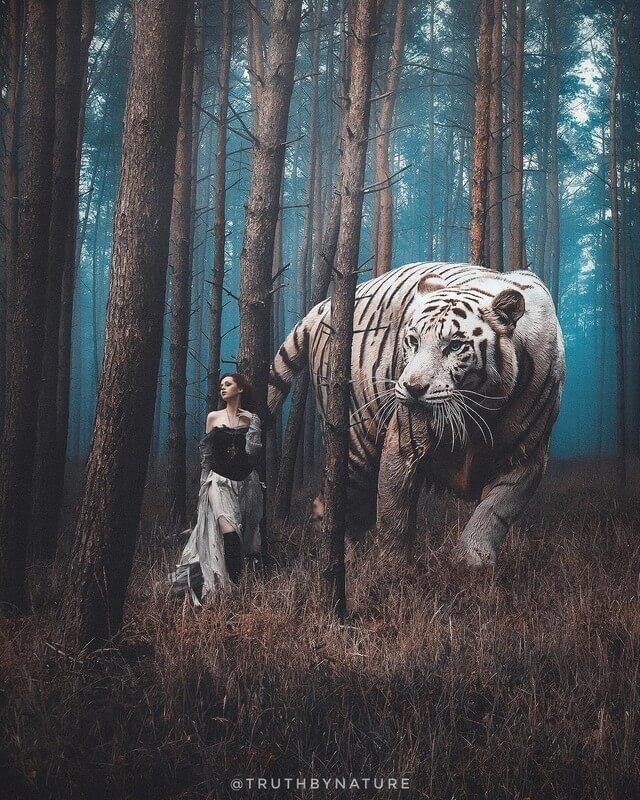 01-White-Tiger-truthbynature-Surrealism-in-Animal-Photo-Manipulation-www-designstack-co