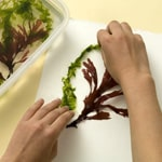 Seaweed Still Life - Step 3