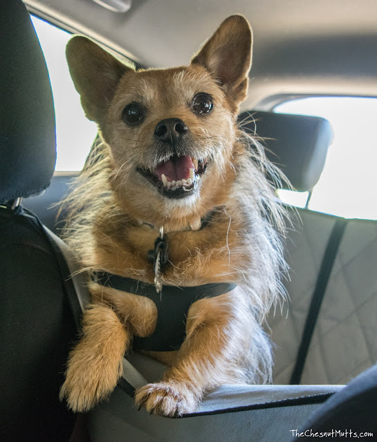 car seat cover with hammock for dogs
